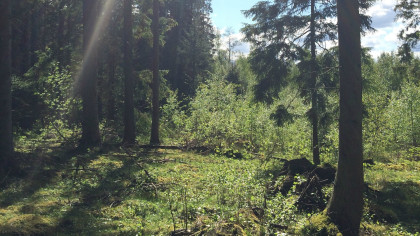 Hiking Southern Sweden Wandern