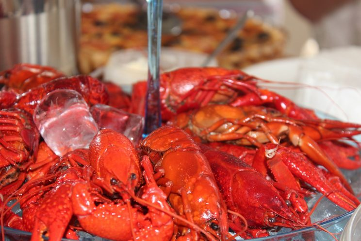 crayfish premiere cooked boiled red salty lake vättern göta canal