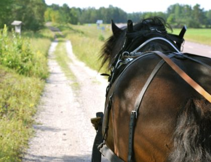 Horse and carriage in Gärdsjö Dalarna Pferd und wagen