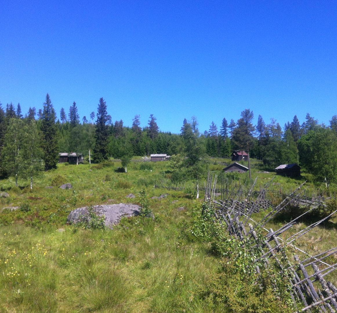 Summer grazing farm Dalarna