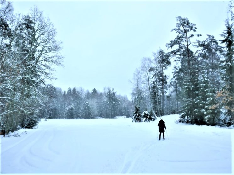 cross country ski skiing sweden
