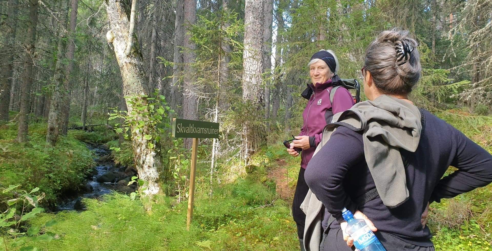 Hiking old-growth forest Dalarna