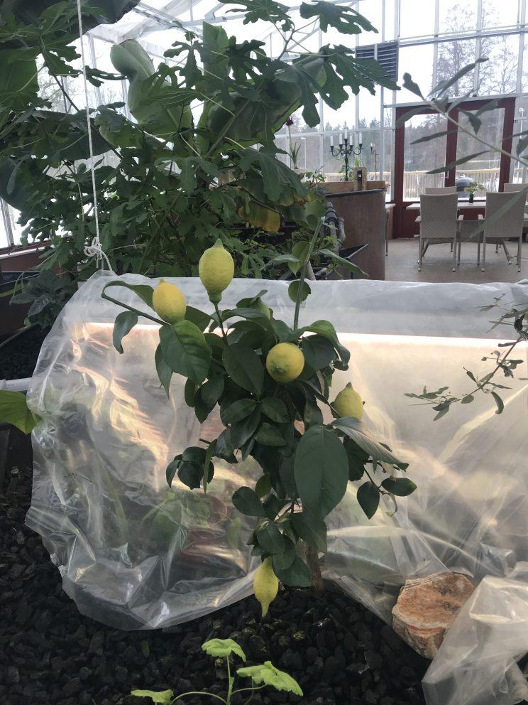 aquaponics lemon biochar conservatory orangery farm